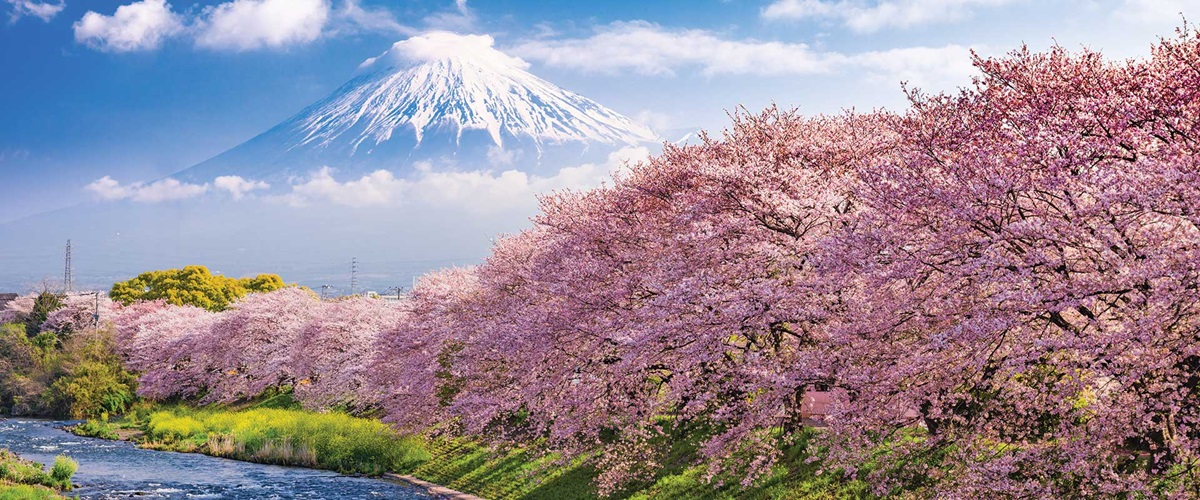 Pink flowering trees along a river with a snow capped mountain in the background, Japan