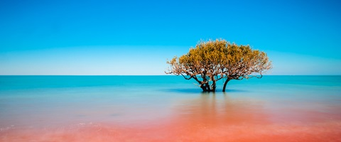 Broome red and blue water with tree