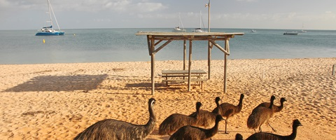 Shark Bay beach with emu's walking