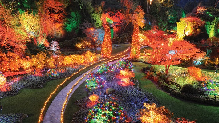 Path way leading through the gardens at night with all trees illuminated with colored lights at Christmas time