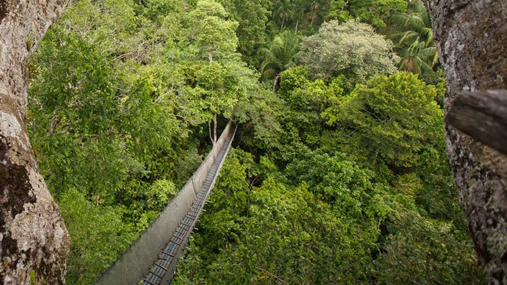 Aerial view over lush green rainforest canopy, Peru